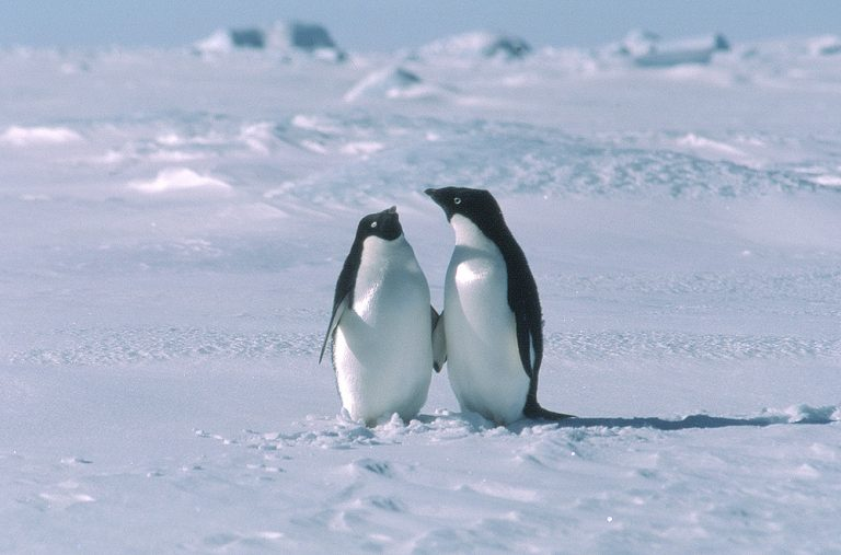 Penguins-Of-Antarctica-antarctica-40869889-1000-660